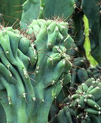 PLANTES SPECTACULAIRES