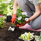 Créer un jardin de rue