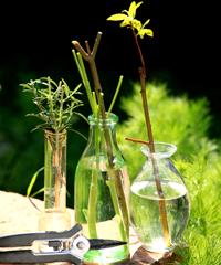 atelier parc tête d'or jardin botanique lyon