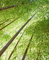 bambou visite activité atelier evenement sortie nature animaux plantes parc tête d'or zoo jardin botanique lyon